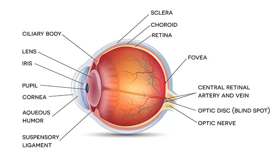 Retinal Tears Atlanta Retinal Detachment Buckhead Lawrenceville